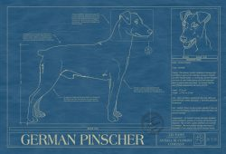 German Pinscher Dog Blueprint
