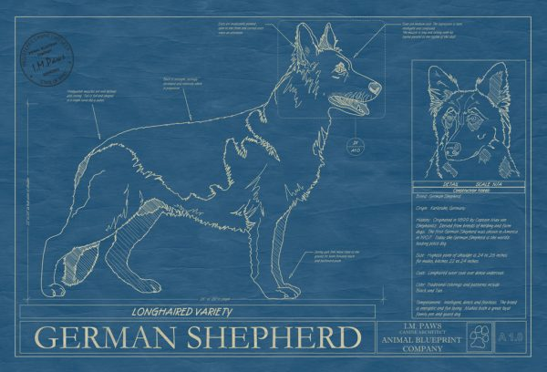 German Shepherd Longhaired Dog Blueprint