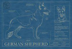 German Shepherd Dog Blueprint