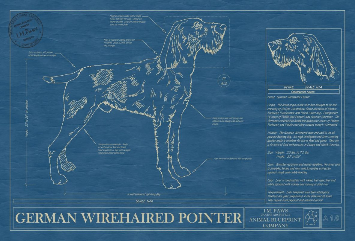 Dog blueprints archives page 8 of 14 animal blueprint company german wirehaired pointer malvernweather Choice Image