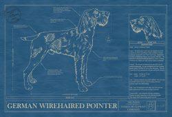German Wirehaired Pointer Dog Blueprint