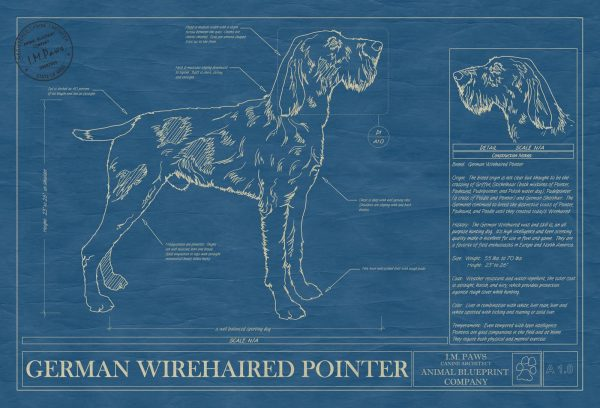 German Wirehaired Pointer Dog Blueprint