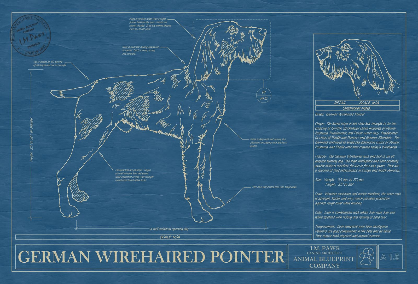 German wirehaired pointer animal blueprint company german wirehaired pointer dog blueprint malvernweather Gallery