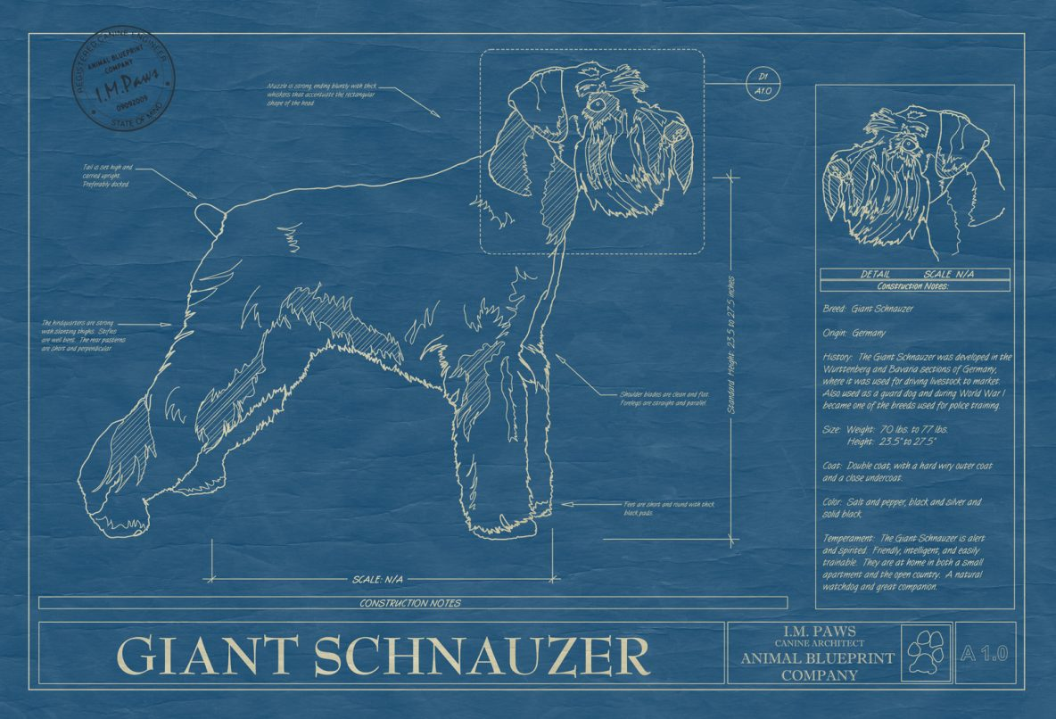 Giant Schnauzer Dog Blueprint