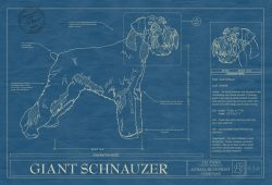 Giant Schnauzer Dog Blueprint