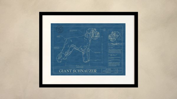 Giant Schnauzer Dog Wall Blueprint