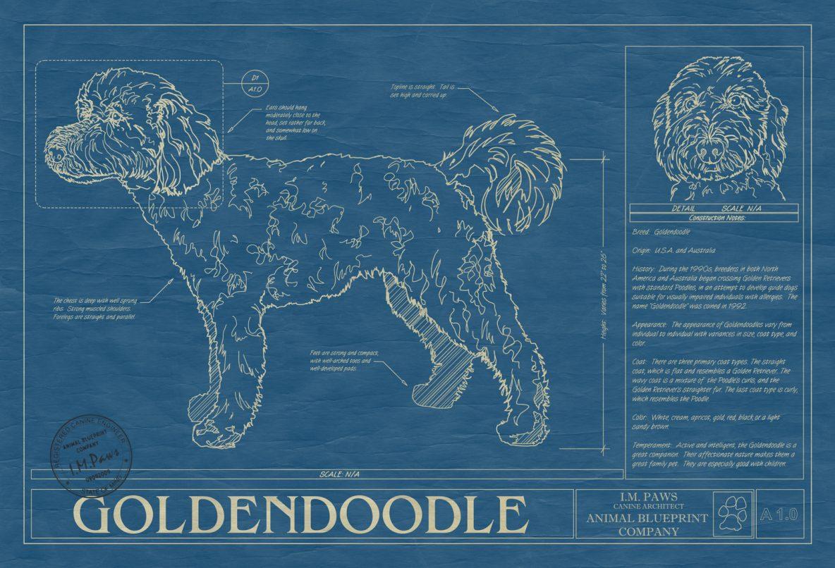 Goldendoodle Dog Blueprint