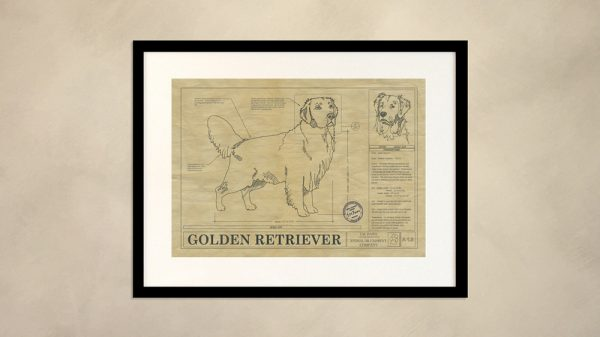Golden Retriever Dog Wall Drawing