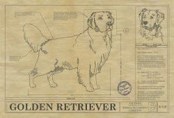 Golden Retriever Dog Drawing