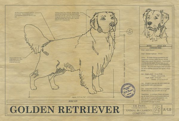 Golden Retriever Dog Drawing
