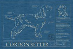 Gordon Setter Dog Blueprint
