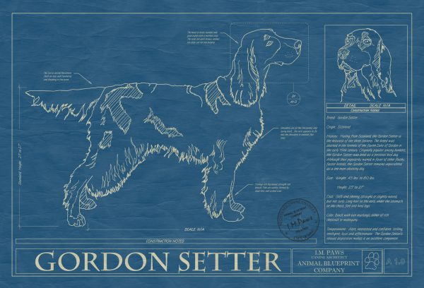 Gordon Setter Dog Blueprint