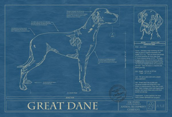 Great Dane Dog Blueprint