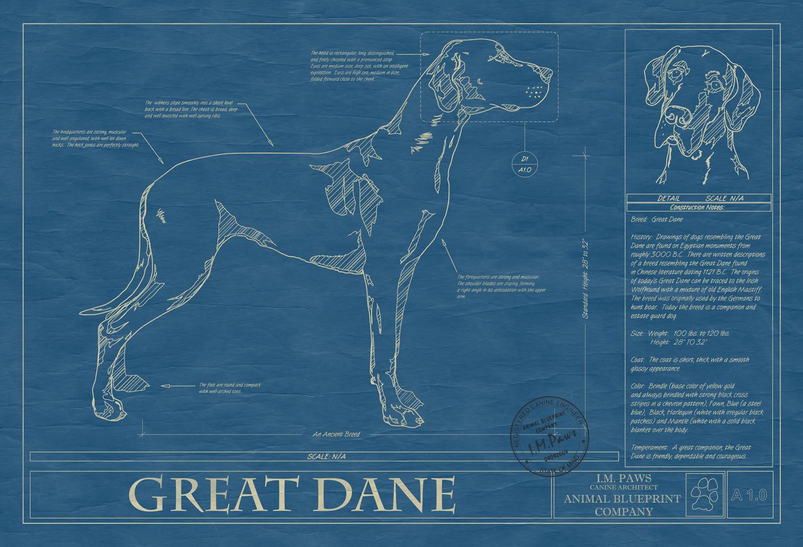 Great dane animal blueprint company great dane dog blueprint malvernweather Gallery