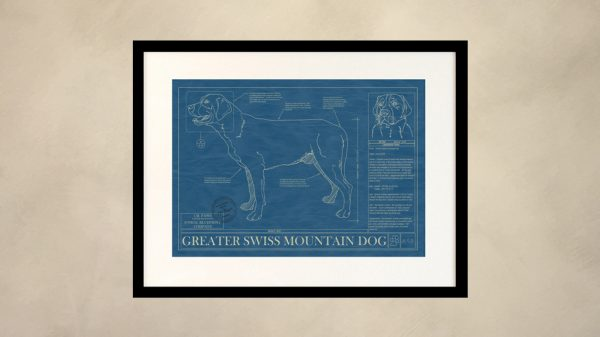 Greater Swiss Mountain Dog Wall Blueprint
