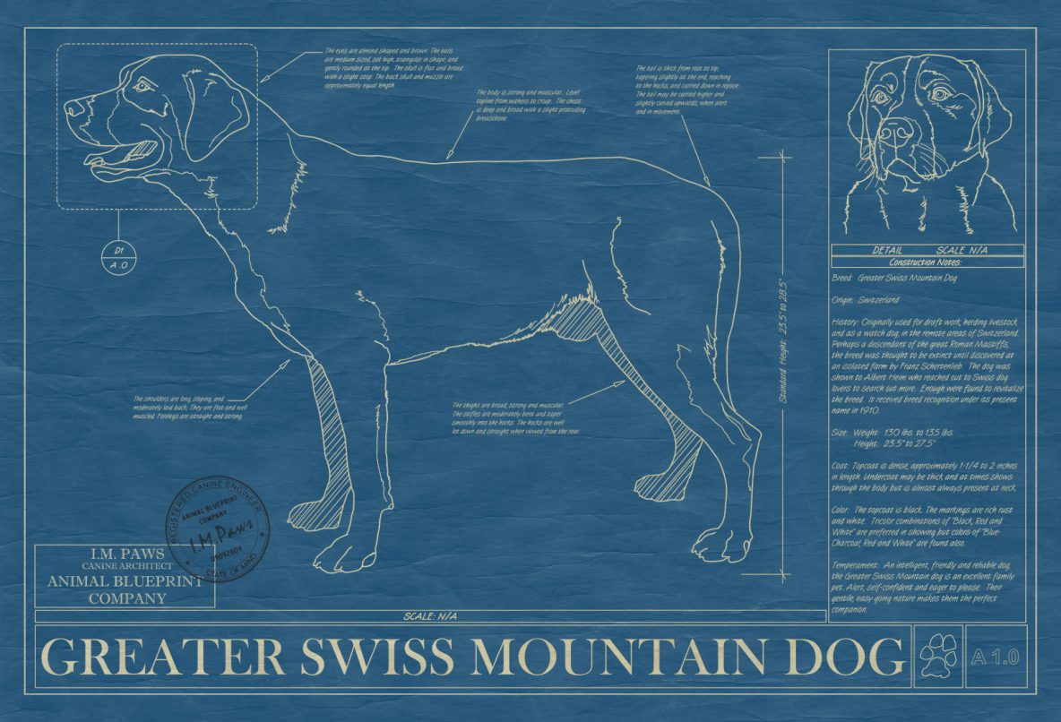Greater Swiss Mountain Dog Blueprint