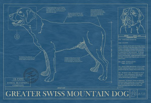 Greater Swiss Mountain Dog Blueprint