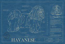 Havanese Dog Blueprint