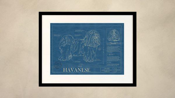 Havanese Dog Wall Blueprint