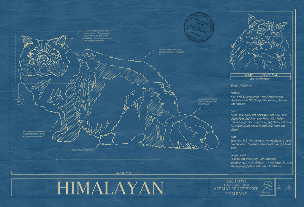 Himalayan Cat Blueprint
