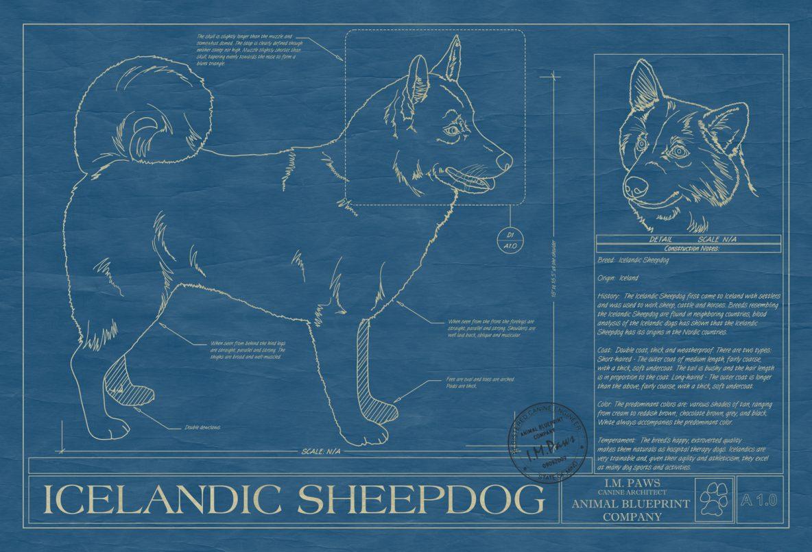 I n archives animal blueprint company icelandic sheepdog dog blueprint malvernweather Choice Image