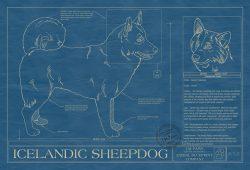 Icelandic Sheepdog Dog Blueprint