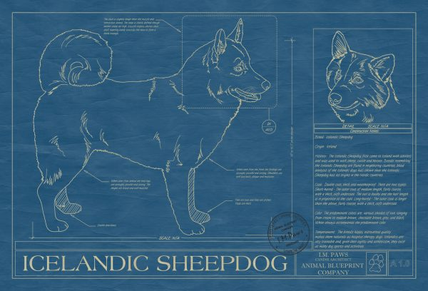 Icelandic Sheepdog Dog Blueprint
