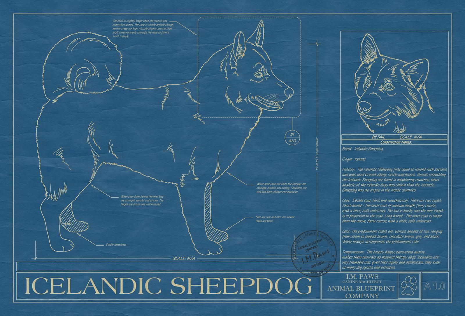 Icelandic sheepdog animal blueprint company icelandic sheepdog dog blueprint malvernweather Images