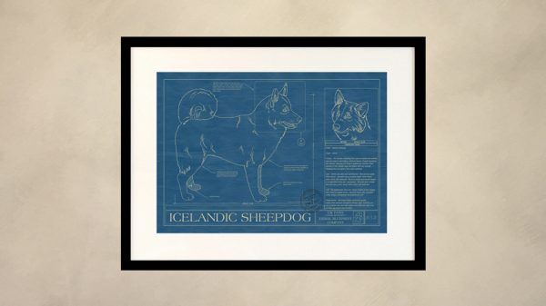 Icelandic Sheepdog Dog Wall Blueprint