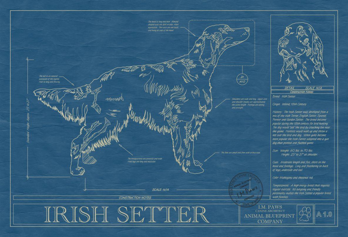 Irish Setter Dog Blueprint