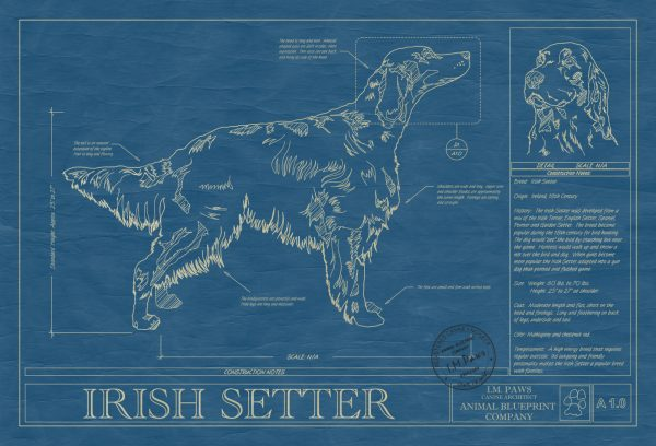Irish Setter Dog Blueprint