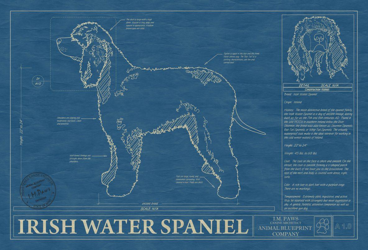 Irish Water Spaniel Dog Blueprint
