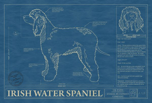 Irish Water Spaniel Dog Blueprint