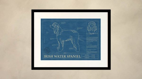 Irish Water Spaniel Dog Wall Blueprint