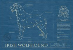 Irish Wolfhound Dog Blueprint