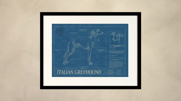 Italian Greyhound Dog Wall Blueprint