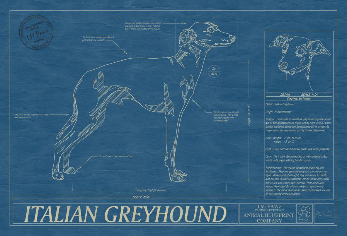 Italian Greyhound Dog Blueprint