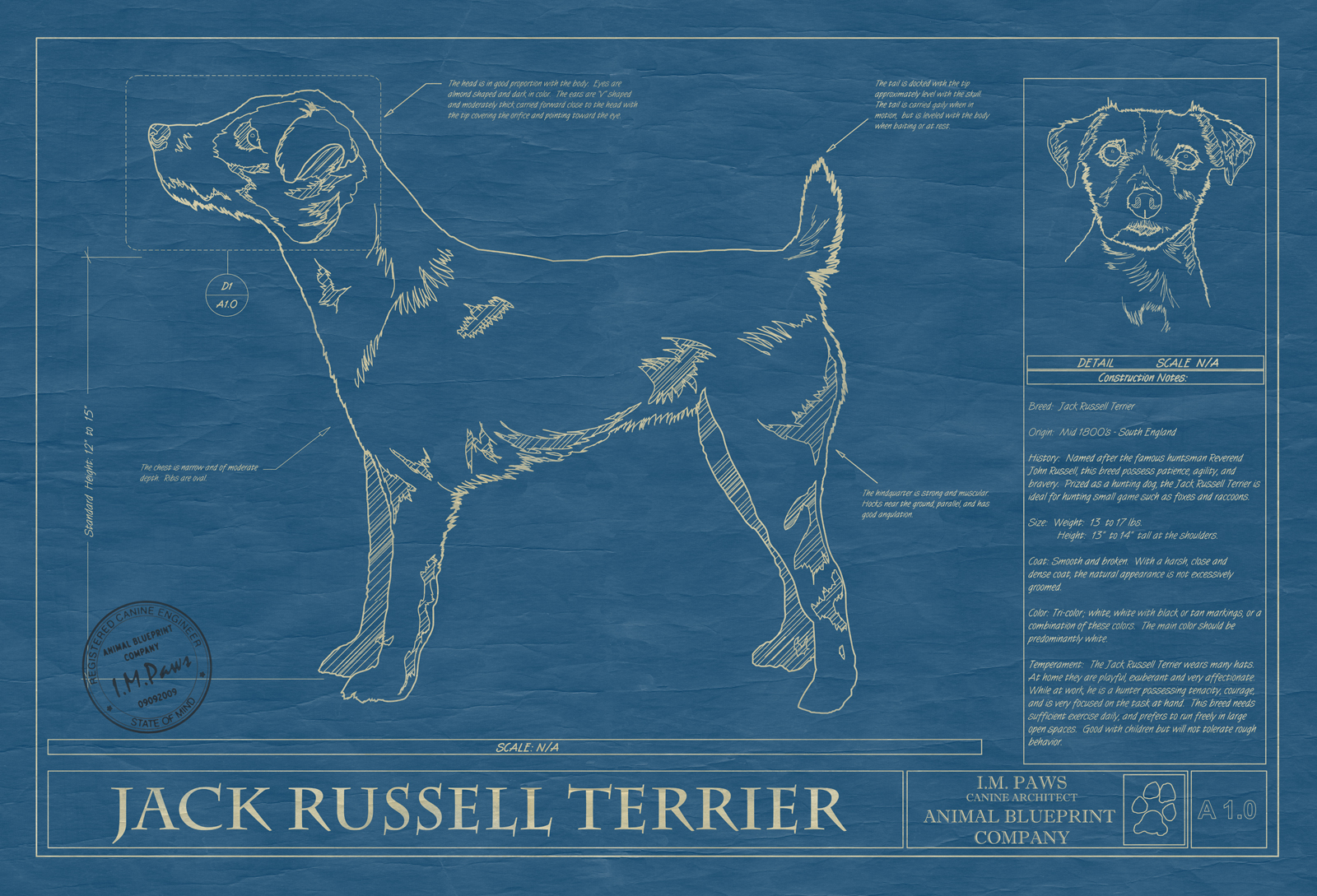 Jack russell terrier animal blueprint company jack russell terrier dog blueprint malvernweather Gallery