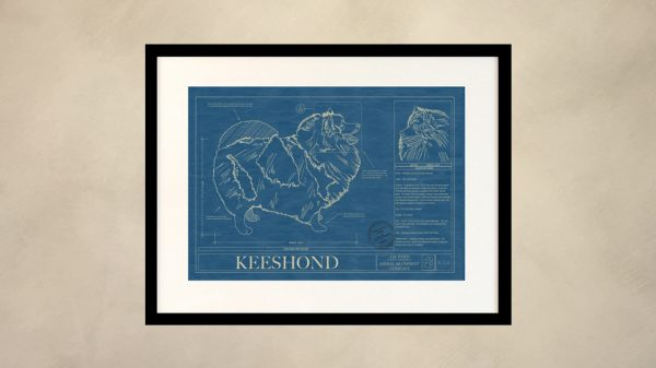 Keeshond Dog Wall Blueprint