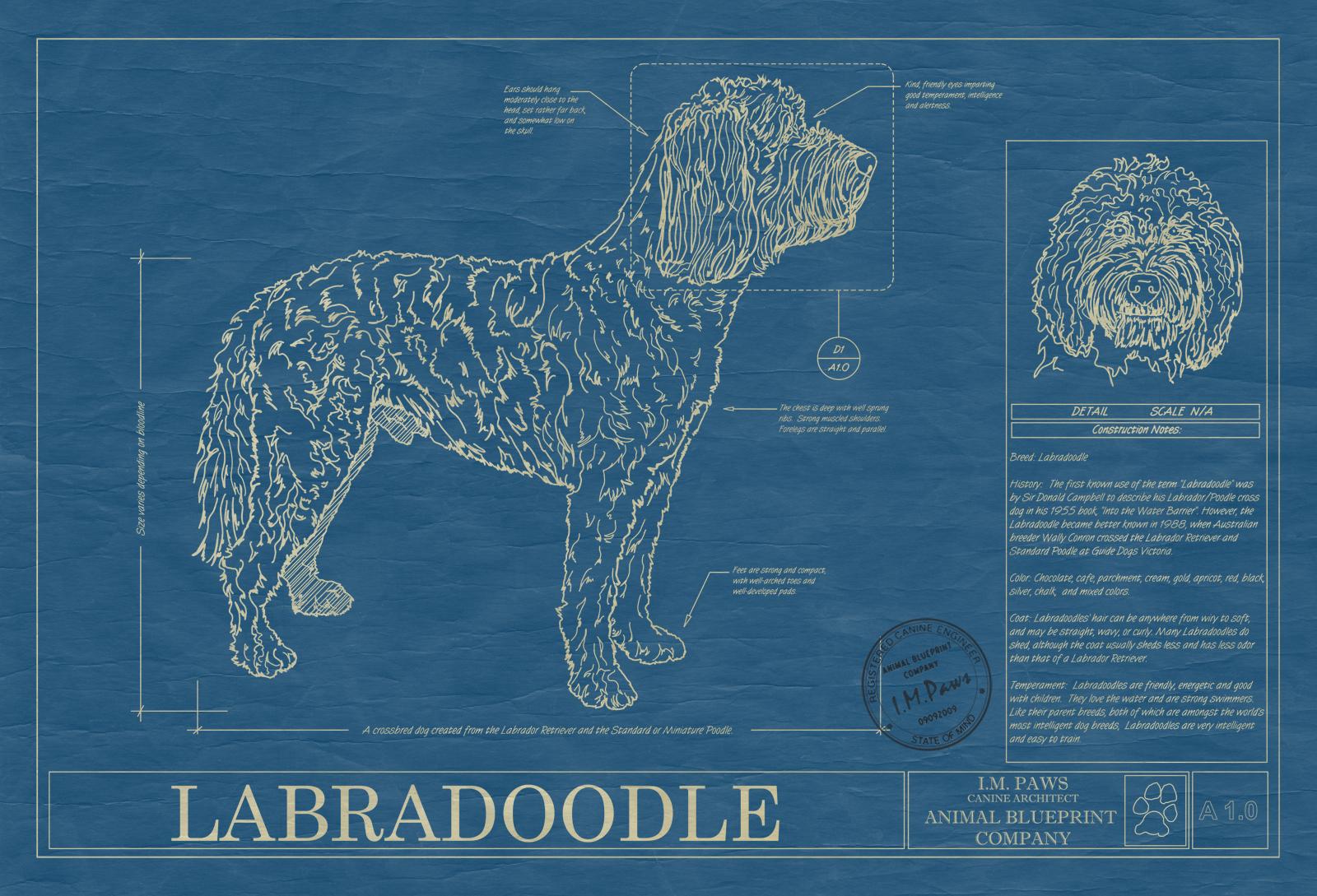 Labradoodle animal blueprint company labradoodle dog blueprint malvernweather Gallery