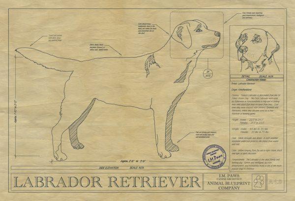 Labrador Retriever Dog Drawing