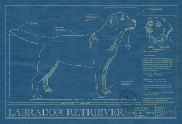 Labrador Retriever Dog Blueprint