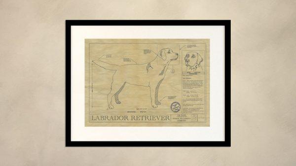 Labrador Retriever Dog Wall Drawing