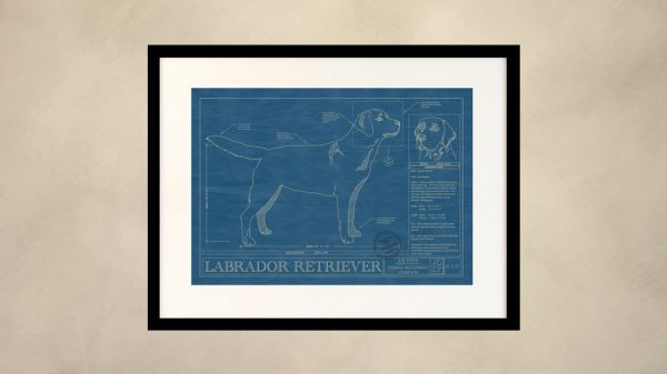 Labrador Retriever Dog Wall Blueprint