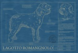 Lagotto Romangnolo Dog Blueprint