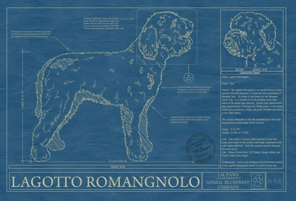 Lagotto Romangnolo Dog Blueprint