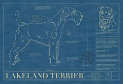 Lakeland Terrier Dog Blueprint