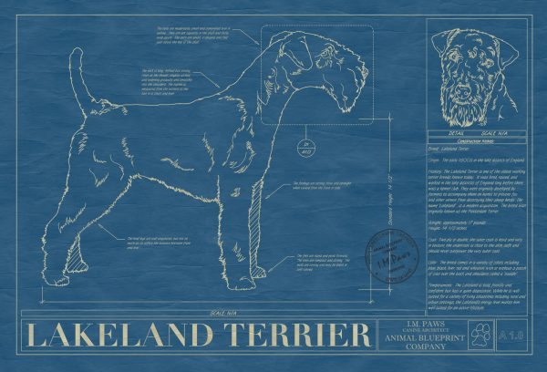 Lakeland Terrier Dog Blueprint