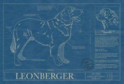 Leonberger Dog Blueprint