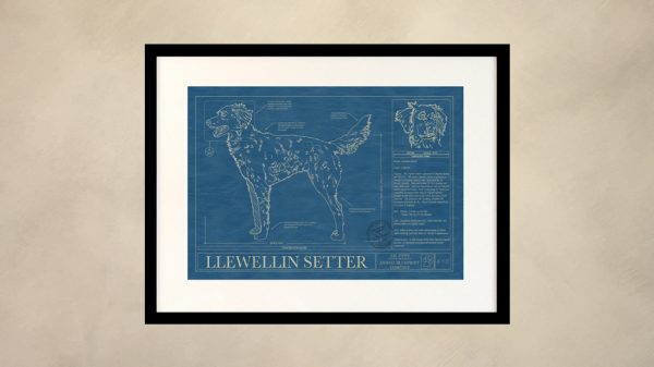 Llewellin Setter Dog Wall Blueprint